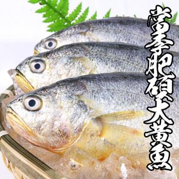 海鮮王  當季肥碩大黃魚 *3件組(400g±10%/尾)