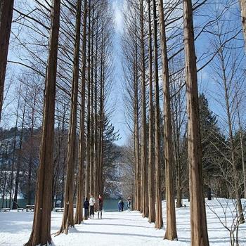 冬季-韓國南怡島愛寶樂園鐵道自行車景福宮塗鴉秀滑雪6日旅遊