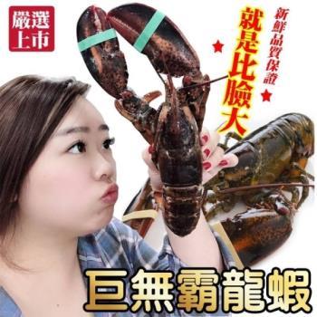 海肉管家-加拿大波士頓螯龍蝦(2隻/每隻約400~500g±10%)