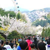清明連假-(賞櫻)韓國五星樂天世界酒店.海鮮總匯長腳蟹吃到飽5日旅遊