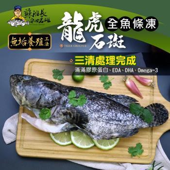 蘇班長安心石斑 龍虎石斑鮮魚條凍800g 3入組 歐盟食安標準 得獎最多的石斑(龍虎石斑 龍膽石斑 永安石斑)