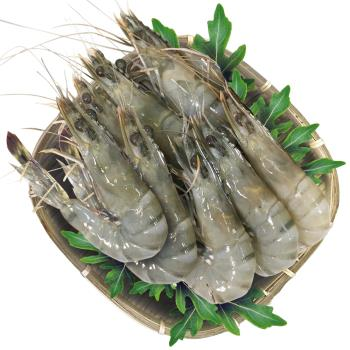 活撈極鮮野生5A海草蝦老饕組
