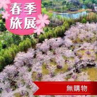 江南櫻花節蘇州無錫黿頭渚拈花灣五星5日(無購物)旅遊