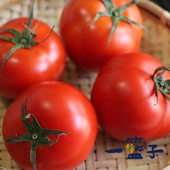 [一籃子]新社牛番茄5斤