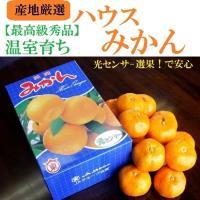 果物樂園-日本西海蜜柑(原裝12入/約1.2kg±10%)