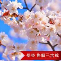 北海道五稜郭登別櫻花隧道紫藤白色戀人溫泉5日(含稅)旅遊