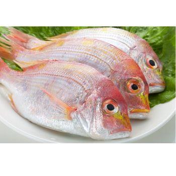 鮮味達人現流赤宗鮮魚超值組(10斤)