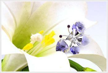 新光飾品-新款施華洛水晶元素小藍蝶胸針