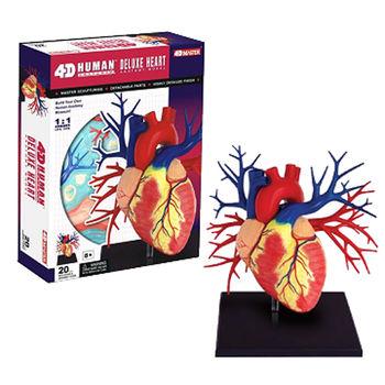 【4D MASTER】人體透視 - 1:1心臟 26081