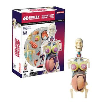 【4D MASTER】人體透視-全透視半身懷孕 26069