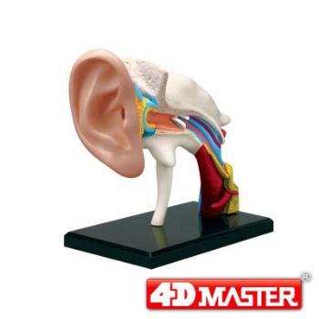 【4D MASTER】人體透視-耳朵 25095