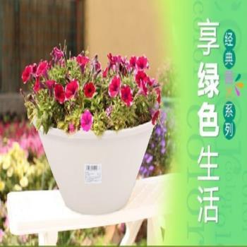 [協貿國際]愛麗思多肉花盆中淺缽樹脂花盆花卉綠植花盆 單個價