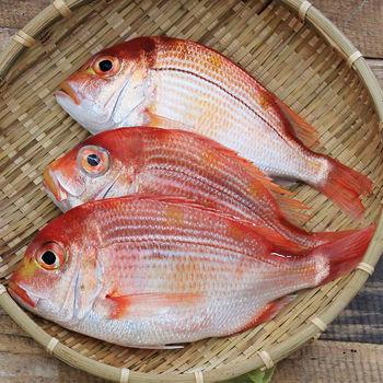 【魚博士-魚霸】野生現撈赤宗1尾(120g/尾)