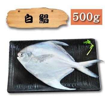 漁季 野生白鯧魚1包(500g/包)