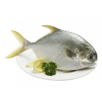 漁季 館長推薦黃尾鯧175克12包