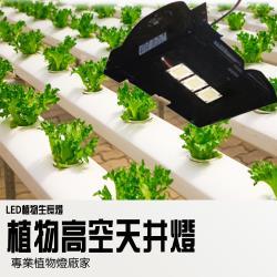 【LED 植物生長燈 150W】高天井燈 全光譜 LED植物燈 泛光型 五年保固 (明緯電源 台灣製造)