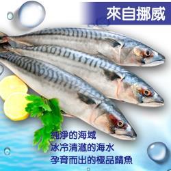 [老爸ㄟ廚房] 上等挪威整尾鯖魚 4尾 (350G/尾)
