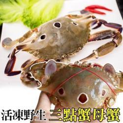 (滿6送6)海肉管家-活凍野生三點蟹-母蟹(共12隻/每隻約100g-150g)