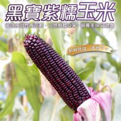 果農直配-嚴選黑寶紫糯水果玉米(5斤±10%/含箱重)