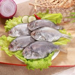 【海之金】鮮凍優質肉魚20包組(500g/包,6尾1包)