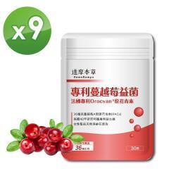 【達摩本草】法國專利蔓越莓益生菌x9包  (30粒/包) 足量36毫克A型前花青素