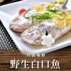 【好食讚】極鮮野生白口魚6包組(270g±10%/包/兩尾/包)