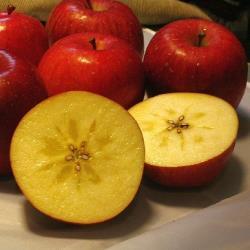 綠安生活 日本青森蜜蘋果6顆禮盒2盒(1.8kg±10%/盒)
