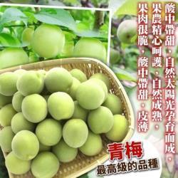 果物樂園-台灣南投信義鄉青梅(大顆5斤±10%含箱重)
