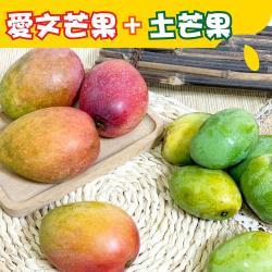 【坤田水果】 愛文芒果+土芒果(1箱)單箱5台斤
